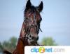 Прикрепленное изображение: Лошадь 1.png
