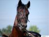 Прикрепленное изображение: Лошадь 2.png