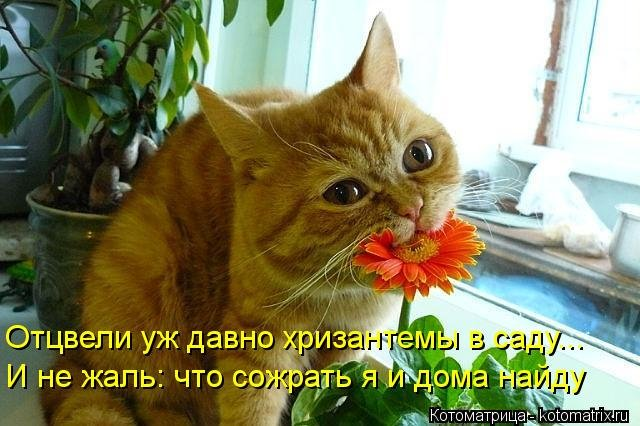 kotomatritsa_6b.jpg